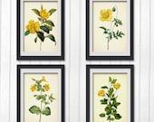 Botanical Print Set, 4 Yellow Flower wall art, digital print printable botanical INSTANT DOWNLOAD
