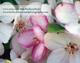 Crabapple Blossom Macro Fine Art Photo Print