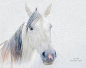 horse art, equine art, horse art print, equine photography, horse photography, equine print, horse print, equine decor, Arabian print