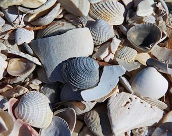 Sanibel Island Seashells II (FREE shipping in the U.S. only)