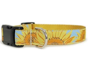 Sunflower Dog Collar, Can be Personalized, Reflective or Engraved Aluminum Buckle, Girl Dog Collar, Light Blue, Big Dog Collar - Sunflowers