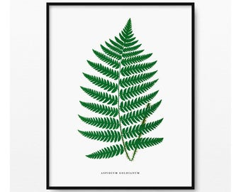 Ferns Print, Botanical Art, Plant Print, Antique Botanical Print, Vintage Illustration, Green Home Decor, Aspidium Goldianum (BP-075)
