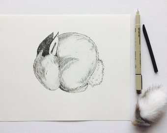 8x10 Original Hand Drawn Bunny Art Curled Up Baby Animals Black and White Ink and Charcoal