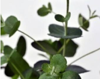 Eucalyptus Spearmint Fragrance oil
