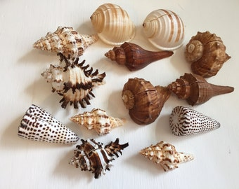 Assorted Sea Shell Place Card Holders (5pc) - Beach Wedding Decoration - Coastal Decor