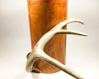 Buckthorn Tankard, Stein, Beer Mug, Tankard