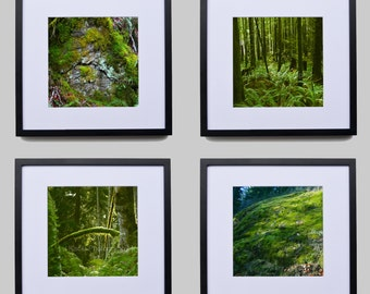 Forest Walk Series One, Vancouver Island, Rain Forest, Green, Trees, Moss, Ferns, Rock