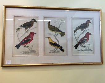 Hand Colored Bird Print