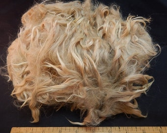 Suri Alpaca Raw Locks, Suri Alpaca Fleece, 3 Ounces, Light Fawn, Low Micron, High Quality Alpaca Fleece, Spinning Locks