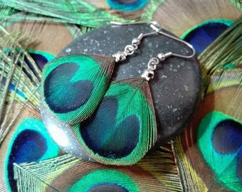 Earrings Peacock feather eyes