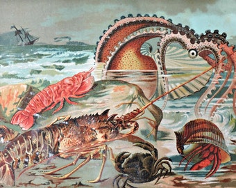 Crustaceans and molluscs print. Sea World. Natural history engraving. Antique illustration 127 years old. 1890 lithograph. 9 x 12'3 inches.