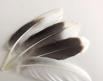 "Dutch goose feathers - greylag goose feathers - craft feathers - 4.7"" inches 1526"
