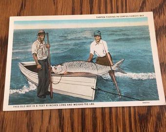 Vintage Tarpon Fishing in Corpus Christi Bay Post Card