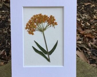 Real Pressed Flower Botanical Art Herbarium Specimen of Bleeding Heart 5x7 OR 8x10