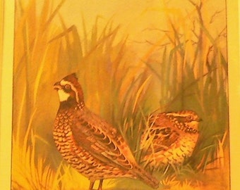 1926 Bobwhite Birds Matted Vintage Print