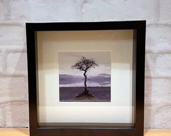 Single Tree Box Frame, Lonesome Tree Print, Loch Lomond Tree, Lonely Tree Black Box Frame