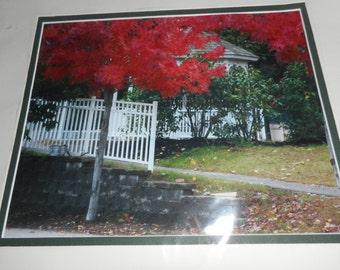 Red Tree in front of Gazebo
