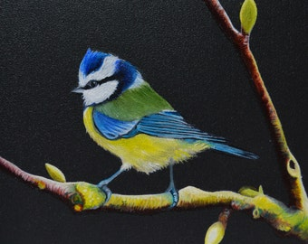 Celestite in the Hazel-blue tit - Blue Tit in the hazel - contemporary oil on wood painting