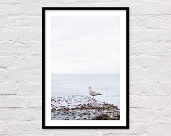 Seagull Print, Modern Coastal Decor, Bird Print, Beach Decor, Seagull Art, Sea Print, Blue Water, Ocean Photo, San Francisco Bay, Download
