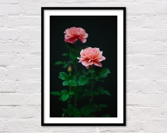 Roses Print, Flowers Print, Printable Wall Art, Minimalist Art, Garden Rose, Modern Pink Art, Black, Flower Photography, Digital Download