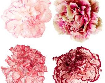 Natural Farm Fresh Carnations - FREE SHIPPING