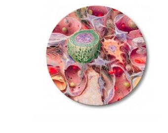 Cell plate melamine
