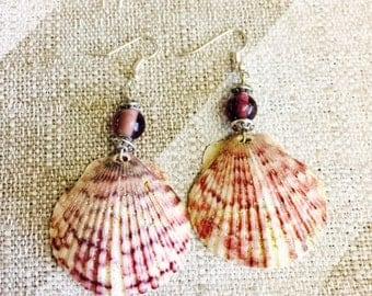 Scallop Seashell Earrings