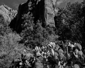 black and white landscape photography, national park, fine art photography, zion, cactus