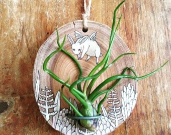 FAT BUNNY illustrated air plant holder