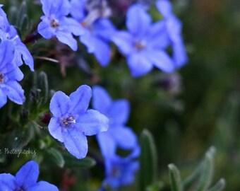 Vibrant Flowers Photo, Garden, Nature, West Coast, Wall Art