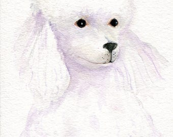 White Poodle painting Original 5 x 7 poodle art, poodle wall art, dog painting, poodle watecolor poodle, watercolor painting, pet painting