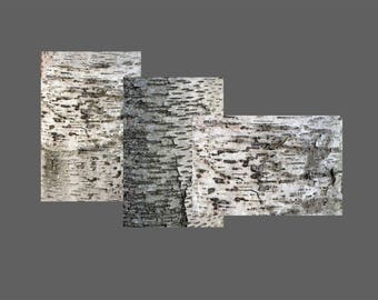Digital Photo Download Real White Birch or Aspen Distressed Tree Bark Texture Patterns, Black and White Nature Stock Image
