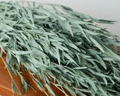 """Bunch of preserved dark sage agonis, """"willow"""" leaves, sage green """"eucalyptus"""", greenery, preserved eucalyptus, preserved leaves"""