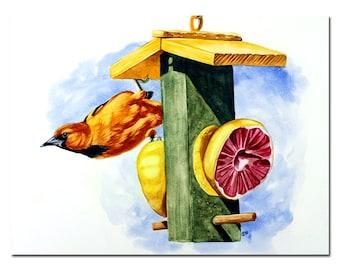 "ORIOLE orange black bird grapefruit feeder watercolor painting Sandrine Curtiss ORIGINAL Art 9x12"""