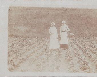 Sugar Beet Farming- 1910s Antique Photograph- Farmers in Field- Tending Crops- Vitady, Sweden- Real Photo Postcard- RPPC- Paper Ephemera