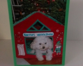 Miniature Toy Poodle Christmas Card, Merry Christmas Card