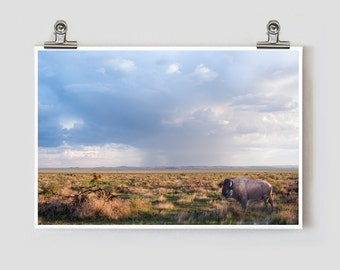 Buffalo Marfa Texas Fine Art Photography Print