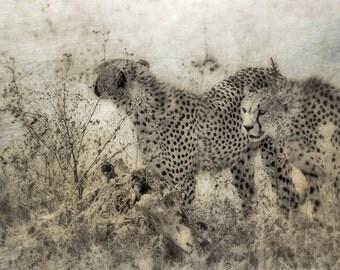 Cheetahs Sepia Cheetah Art Fine Art Print Serengeti Africa African Home Decor