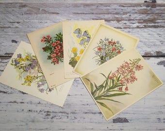 Lot of 5 Vintage Postcards . Vintage Postcard Set . Antique Floral Postcards . Flowers .