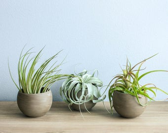 Set of 2 Charcoal Clay Containers with Custom Tillandsia Air ... | Air Plant Containers