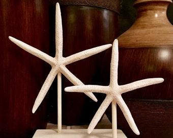 Beach Decor, Starfish, Large Starfish, Beach Home Decor, Star Decor, Rustic Home Decor, Patio Decor, Woodland Nursery, Boho Wedding
