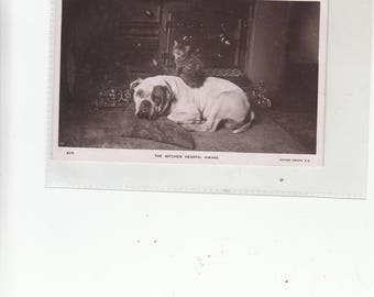 "C1910s ""The Kitchen Hearth,Awake- Bulldog Relaxed With Cat Sitting On His Back, Antique Photo Postcard"