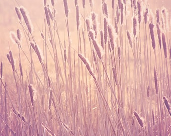 Nature photography, pink wall art, reeds, pastel, fine art photography, happy, summer, framed picture, mounted, large, cottage chic, neutral