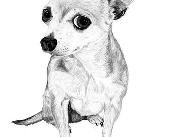 """Pet Portrait, Custom Pet Portrait, Illustration, drawing, gift, art, your pet 8""""x10"""" or 11""""x14"""" print and JPG & PDF file-Example here"""
