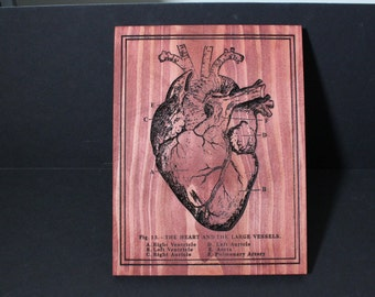 Carved Anatomical Heart Scientific Diagram | Oddities and Curiosities
