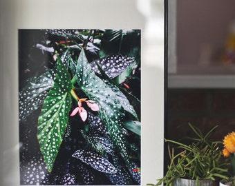 Flora No. 2 | 8x10 Giclee Print