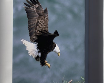 Canvas 24x36; Bald Eagle
