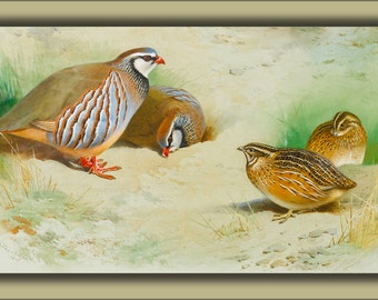 16x24 Poster; French Partridge And Chicks By Archibald Thorburn 1915