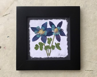 Pressed Columbine behind glass Picture. 8x8. Available in Black and Walnut frame