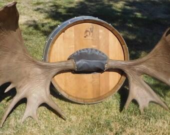 Moose Antler mount
